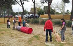 Foto de una actividad de terapia asistida con perros desarrollada por la Fundación Deporte y Desafío